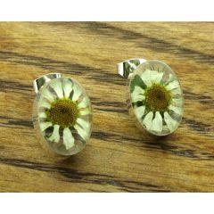 Oval Daisy Silver Stud Flower Earrings